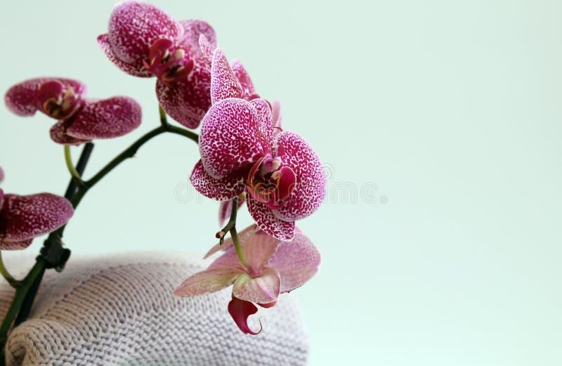 Vêtements, fait main tricotés, laine, mohair et coton Près de eux sont les orchidées Pour la carte de voeux, en-tête de site Web photographie stock libre de droits