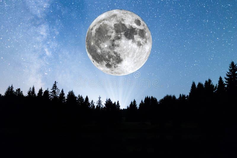 Vía láctea estupenda de la silueta de los árboles de pino de la luna foto de archivo
