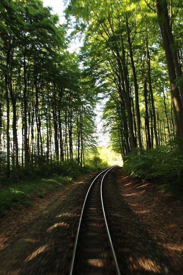 Vías del tren en el bosque imagenes de archivo