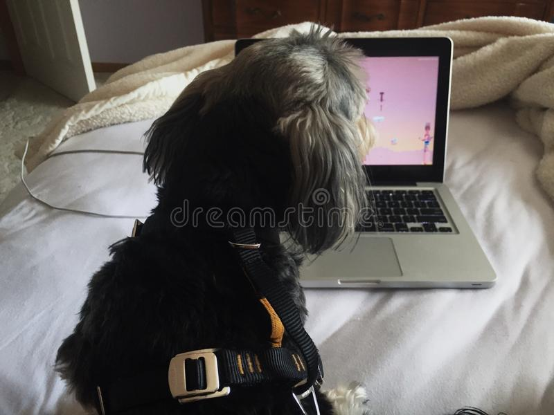 Vídeos e cães fotografia de stock