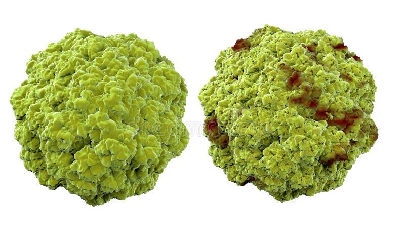 Vírus, bactérias, micróbio conceito médico da anatomia, isolado imagem de stock