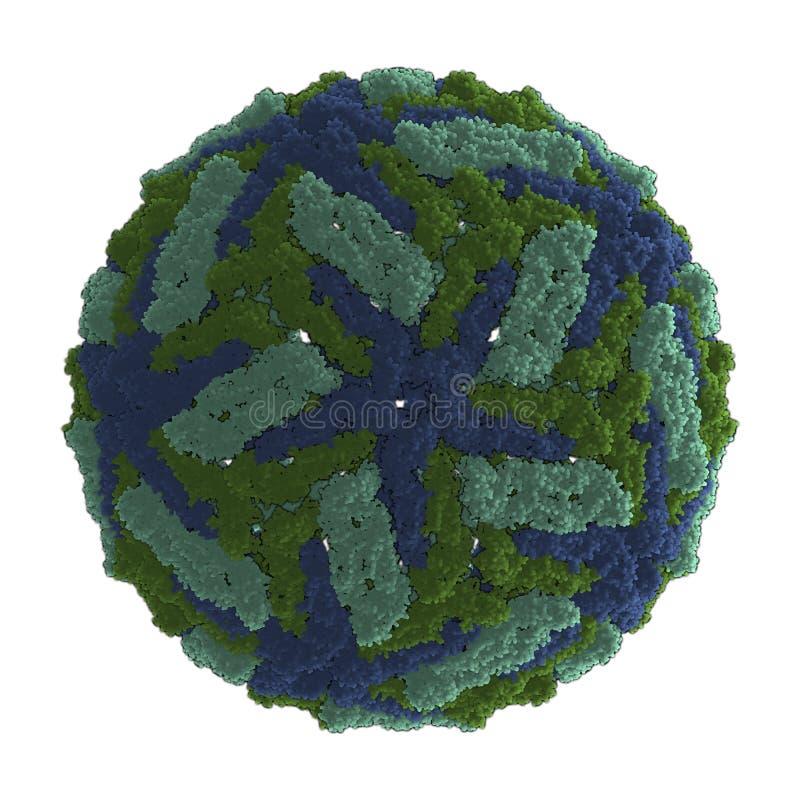 Vírus de dengue (DENV) ilustração do vetor