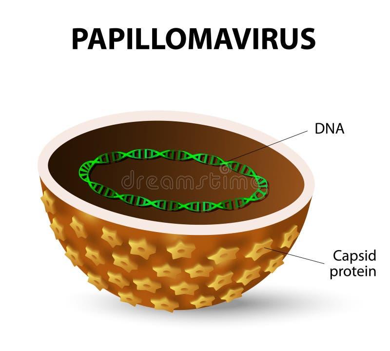 Vírus de papiloma humano HPV ilustração royalty free
