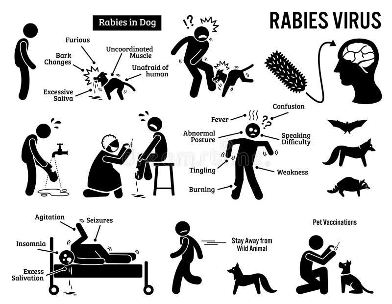 Vírus de raiva em Clipart humano e animal ilustração stock