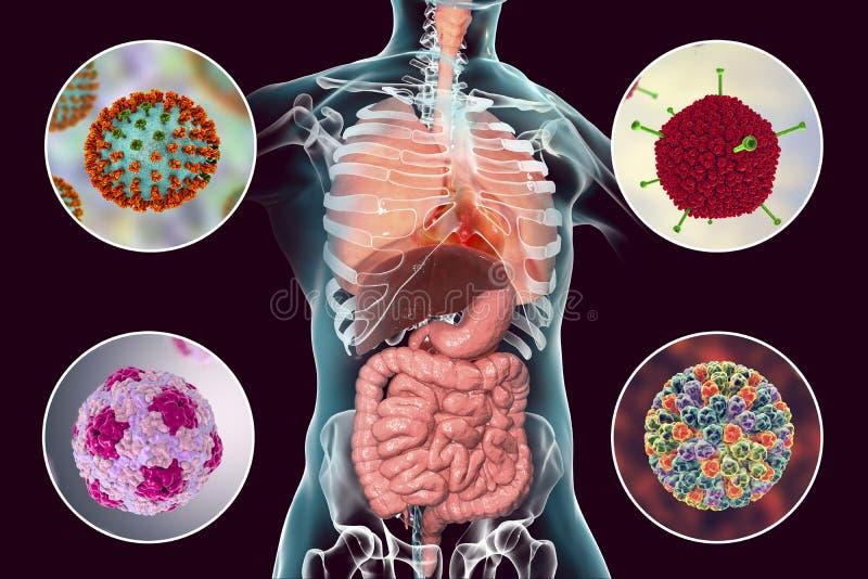 Vírus patogênicos humanos que causam infecções respiratórias e entéricos ilustração royalty free
