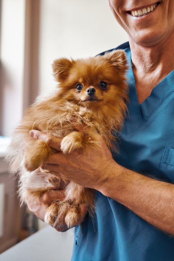 Vóór controle Vrolijke mannelijke dierenarts die een leuke kleine hond met doen schrikken ogen houden terwijl status bij veterina stock afbeelding