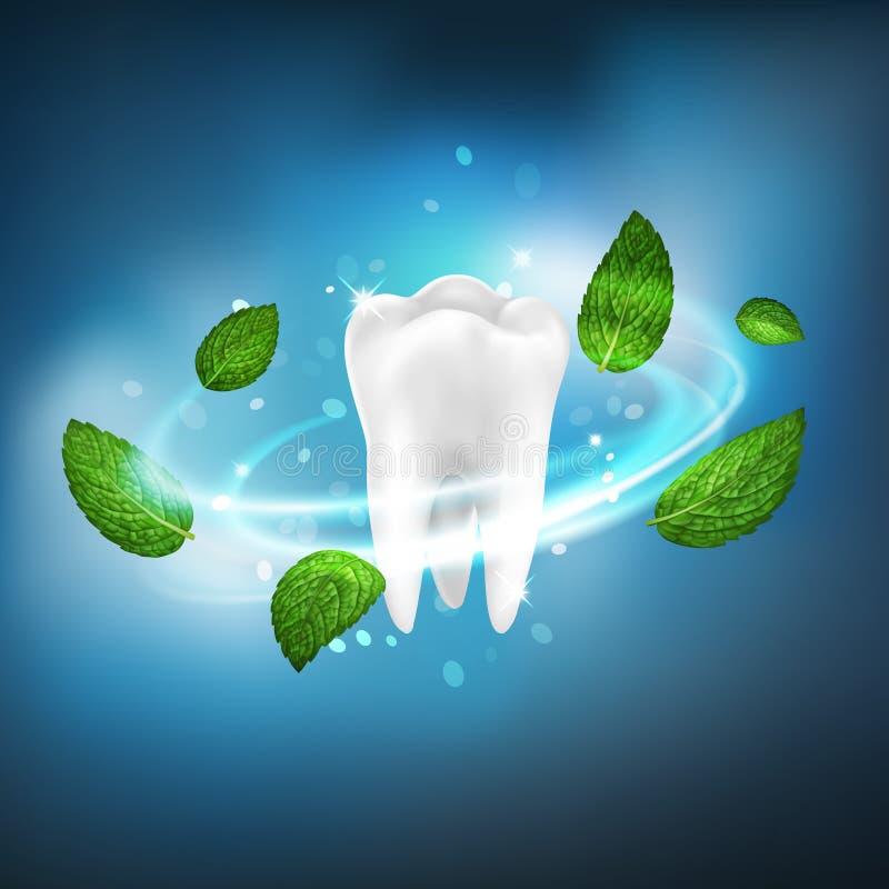 vórtice aislado realista del vector 3D de las hojas de menta alrededor de un diente blanco stock de ilustración