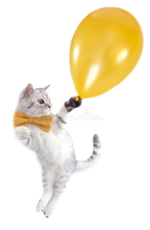 Vôo do gatinho do gato com um balão dourado fotografia de stock royalty free