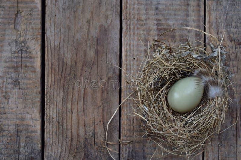 Vögel ärgert vom Fasan mit Federn im Nest des Heus auf hölzernem Hintergrund Kopieren Sie Platz lizenzfreie stockbilder