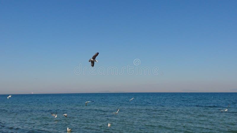 Vögel über blauem Meer-yalova Strand lizenzfreie stockfotos