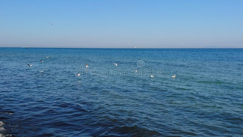 Vögel über Meer stockfoto