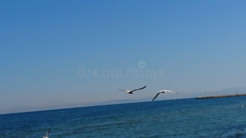 Vögel über Meer stockbild