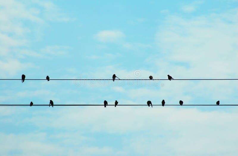 Vögel stockfotografie