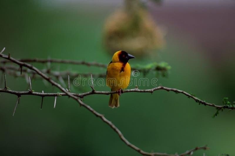 Vögel stockbilder
