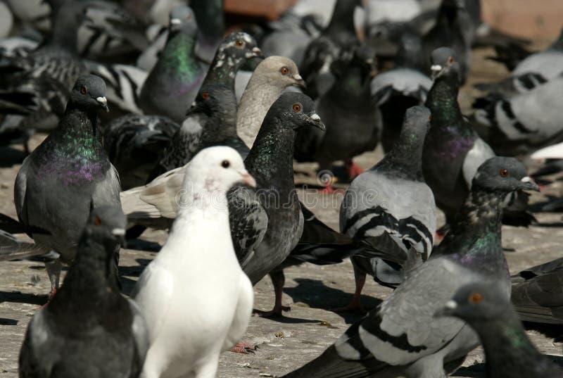 Vögel lizenzfreies stockbild