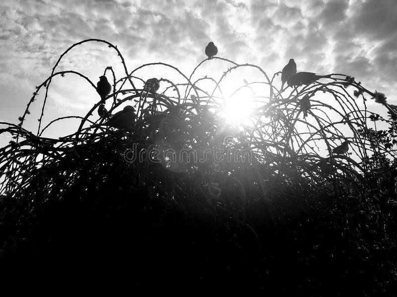 Vögel auf Büschen lizenzfreies stockfoto
