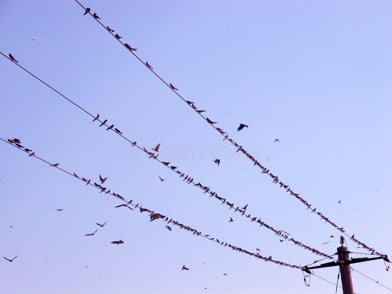 Vögel auf dem Draht stockfotografie