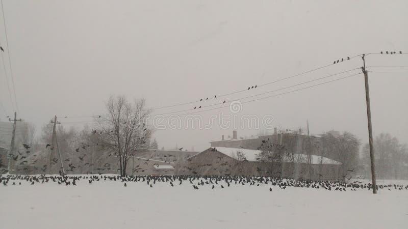 Vögel auf dem Schnee lizenzfreie stockbilder