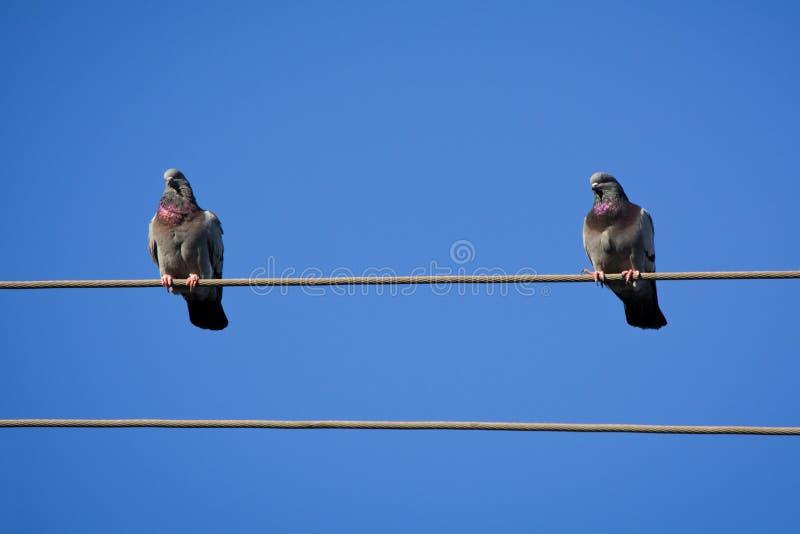 Vögel auf Draht stockfoto
