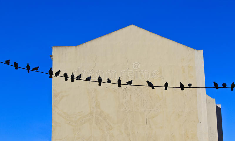 Vögel auf Draht lizenzfreies stockfoto