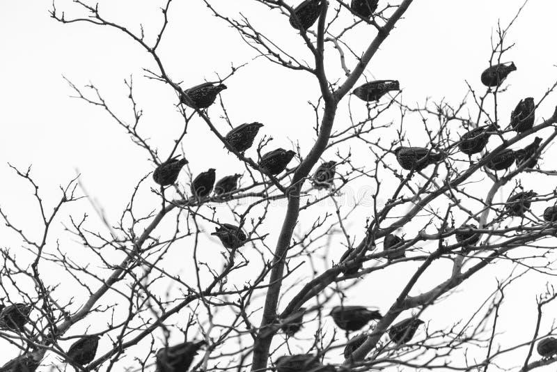 Vögel auf einem Baum lizenzfreie stockbilder