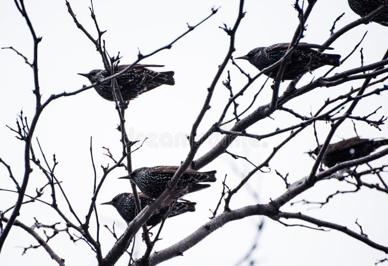 Vögel auf einem Baum lizenzfreies stockfoto