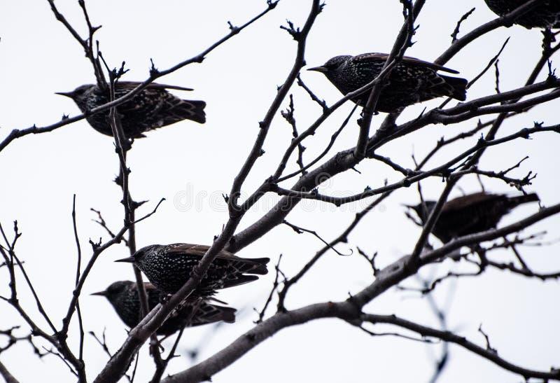 Vögel auf einem Baum lizenzfreie stockfotos