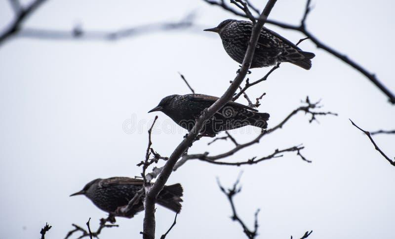 Vögel auf einem Baum lizenzfreie stockfotografie