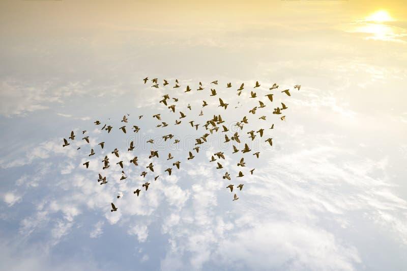 Vögel auf Himmel, Wachstumsentwicklungskonzept stockfotos