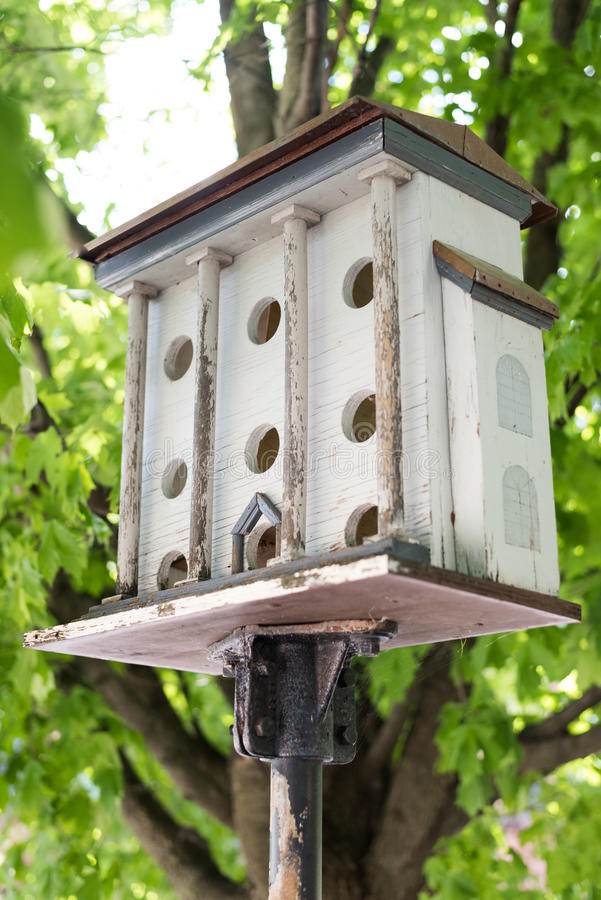 Vögel bringen auf einem Stock unter einem Baum unter lizenzfreies stockbild