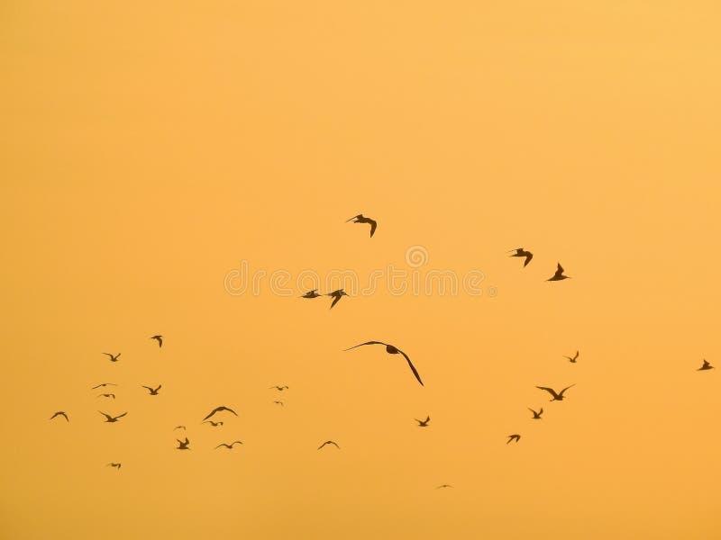 Vögel an der Hintergrundbeleuchtung bei dem Sonnenuntergang stockfoto