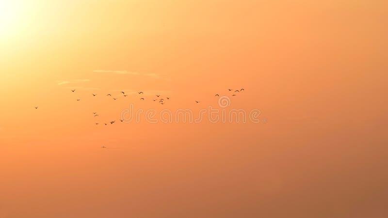 Vögel, die auf einen orange Himmel fliegen stockfoto