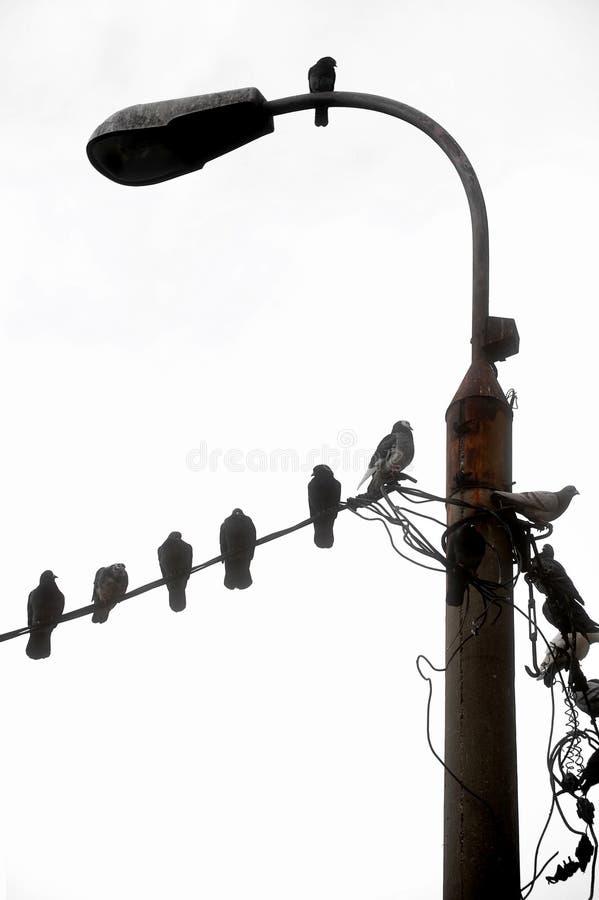 Ziemlich Elektrische Leitung Nachstellen Fotos - Die Besten ...
