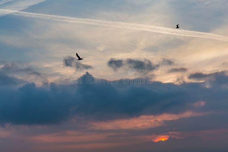 Vögel, die in bewölkten Himmel mit hochrotem Sonnenaufgang hinter die Alpen fliegen stockbilder