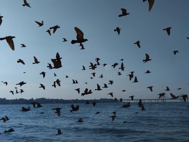 Vögel, die in Bildung über dem Meer fliegen lizenzfreie stockfotografie