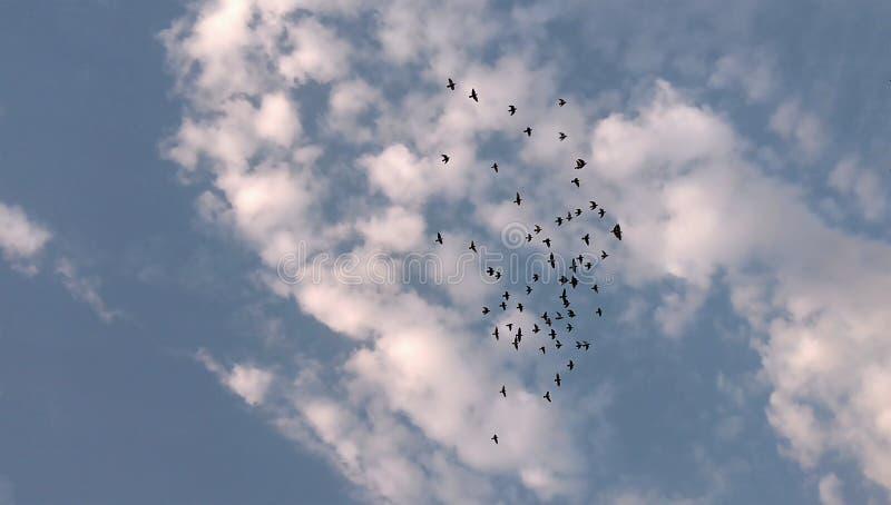 Vögel, die in blauen und bewölkten Himmel fliegen lizenzfreie stockfotos