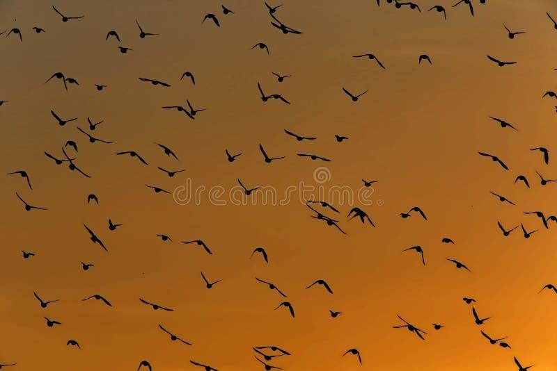 Vögel, die in den Himmel fliegen stockfoto