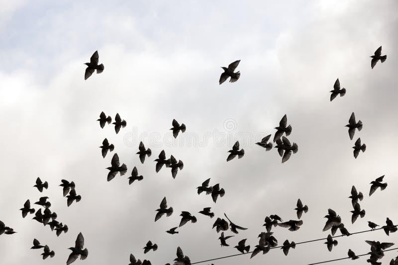 Vögel, die in den Himmel fliegen stockfotografie