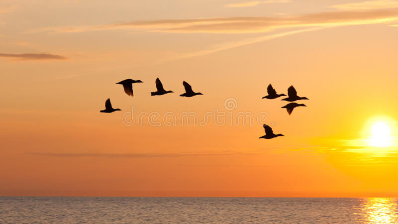 Vögel, die in den Himmel am Sonnenuntergang fliegen stockbild
