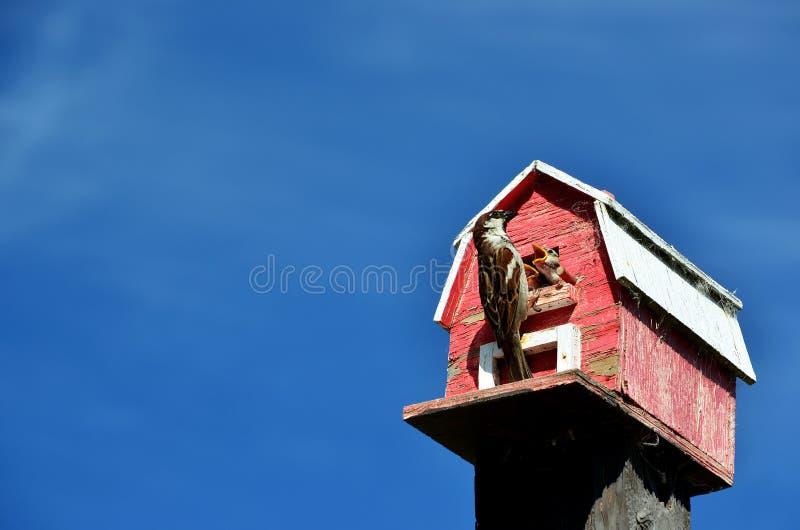 Vögel, die an einem Birdhouse speisen stockbild