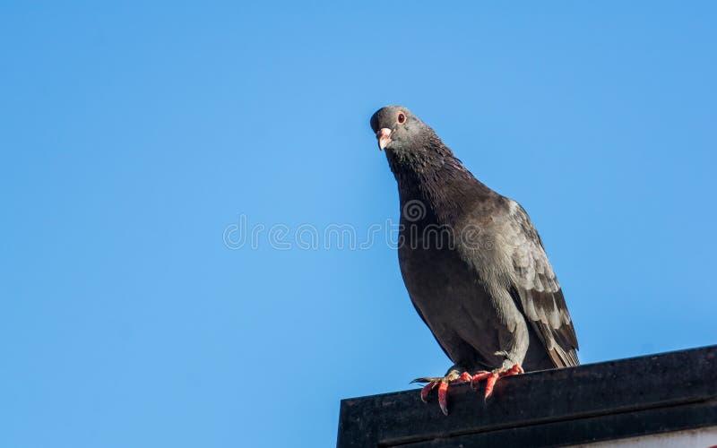 Vögel, die entlang ich so ernst anstarren stockbild