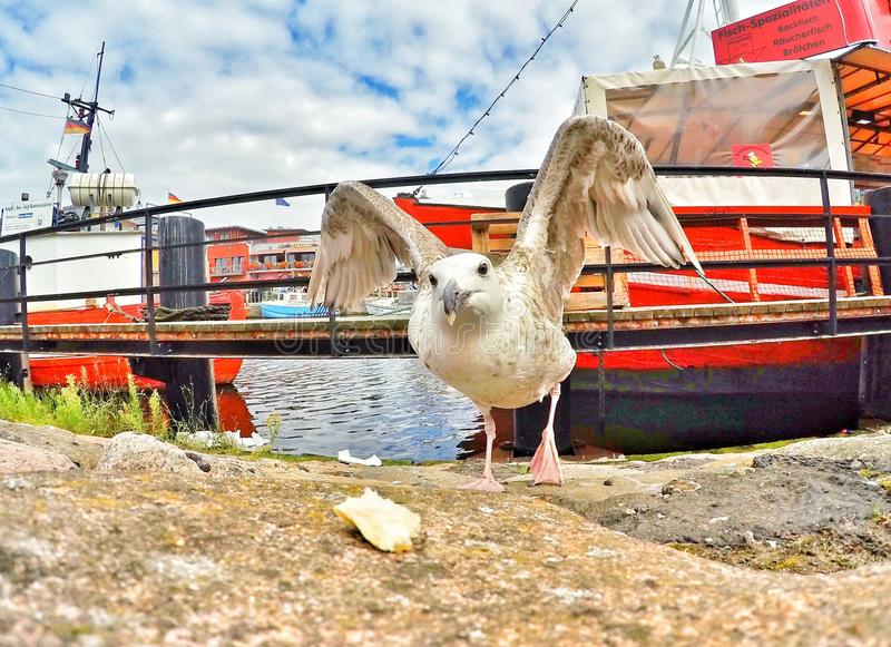 Vögel, die für Nahrung kämpfen stockfotografie