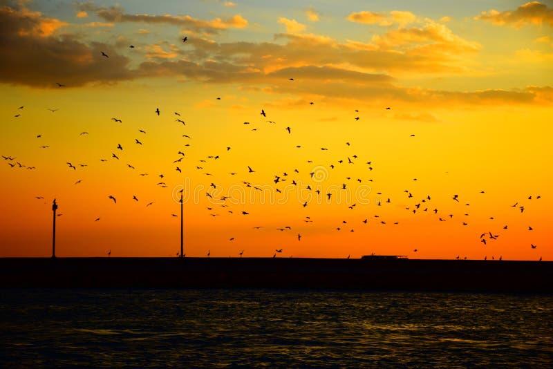 Vögel, die gegen einen Sonnenuntergang fliegen stockfotos