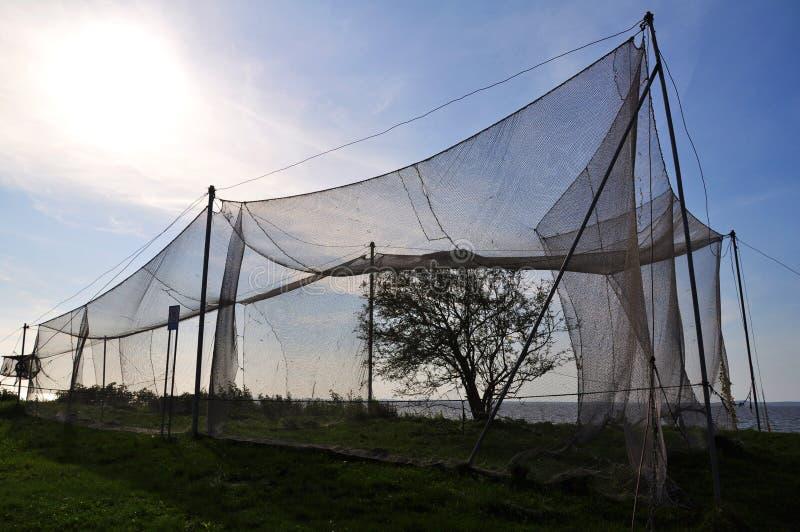 Vögel, die Netze im vente Umhang abfangen stockbilder