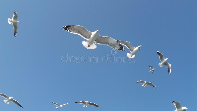 Vögel, die schweben, um die Erdnüsse zu fangen lizenzfreie stockfotos
