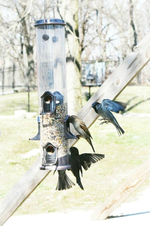 Vögel, die von der Vogelzufuhr essen lizenzfreie stockbilder