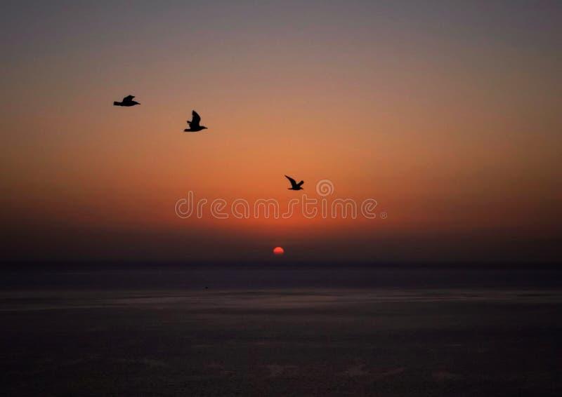 Vögel, die vor einem schönen Sonnenuntergang fliegen stockbild