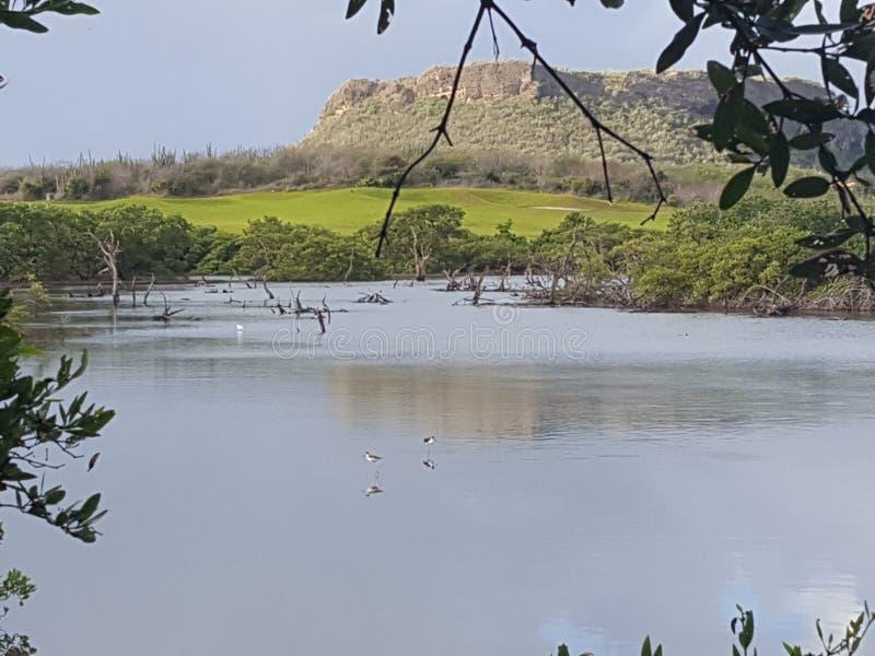 Vögel, die in Wasser einziehen birdwatching lizenzfreies stockfoto