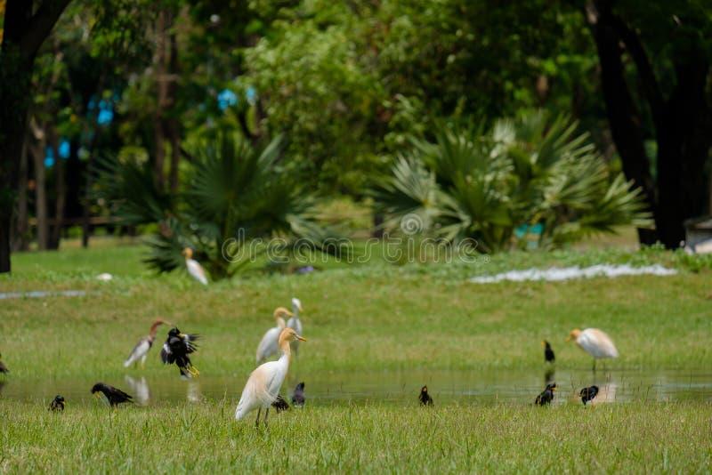 Vögel, die Weg herumsuchen stockfotografie
