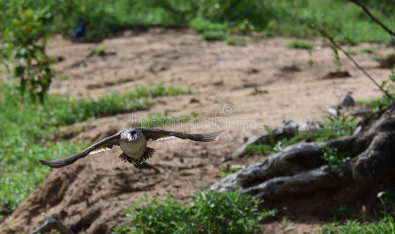 Vögel im Flug lizenzfreies stockbild
